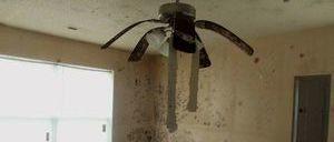 Mold Infestation Cleanup Of Living Room