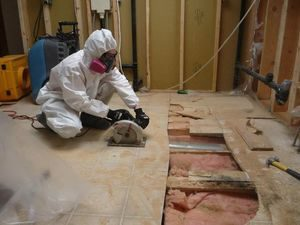 A Technician Conducting Mold Removal In A Basement